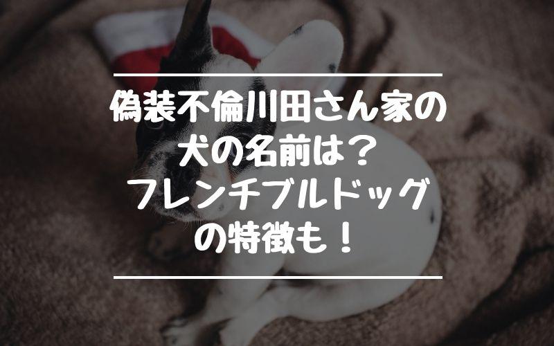 偽装不倫|お隣の川田さん家の犬の名前は?フレンチブルドッグの特徴も!