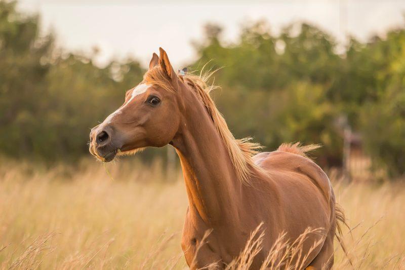 アーモンドアイは有馬記念で飛ぶ?ファンの声は?